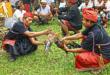 Mistik dan mitos Sabung ayam