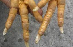 10 ciri sisik kaki ayam bangkok