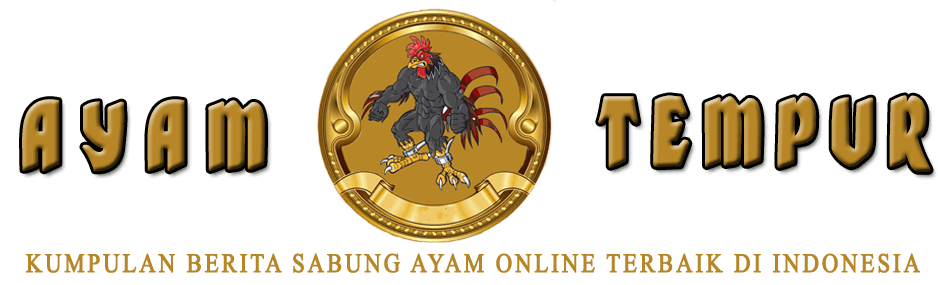 Kumpulan Berita Sabung Ayam Online
