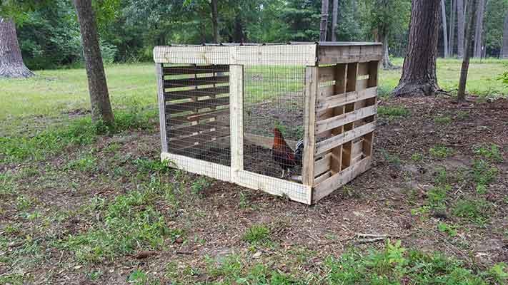 kriteria, kandang ayam aduan, terbaik, ayam aduan, ayam petarung, ayam bangkok, botoh tua, ciri