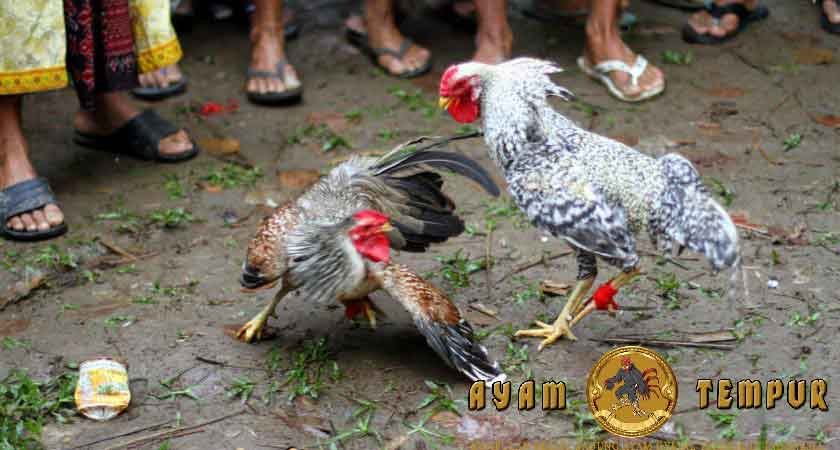 Pukulan ayam yang mematikan, pukulan jiling