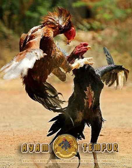 jenis pukulan ayam, pukulan ayam mematikan