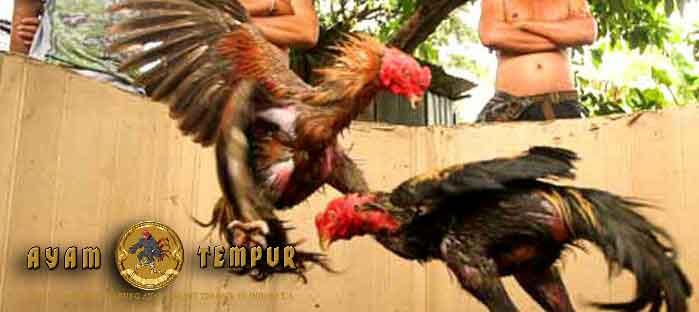 pukulan ayam mematikan, jenis pukulan ayam