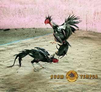 Pukulan ayam yang mematikan, pukulan ubun-ubun